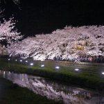 DSC09508 150x150 - [調布・野川]一夜限り・野川の桜ライトアップ2018