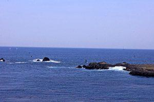 DSC09558 300x200 - 江の島一番人気店の生しらす丼・生しらす生桜海老丼 - しらす問屋 とびっちょ本店